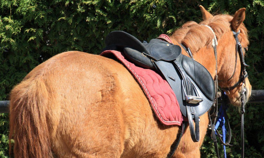 Pferd mit Sattel